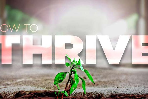 Thrive sermon series plant growing in gravel