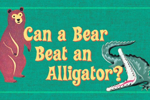 A bear and an alligator for the sermon can a bear beat an alligator.