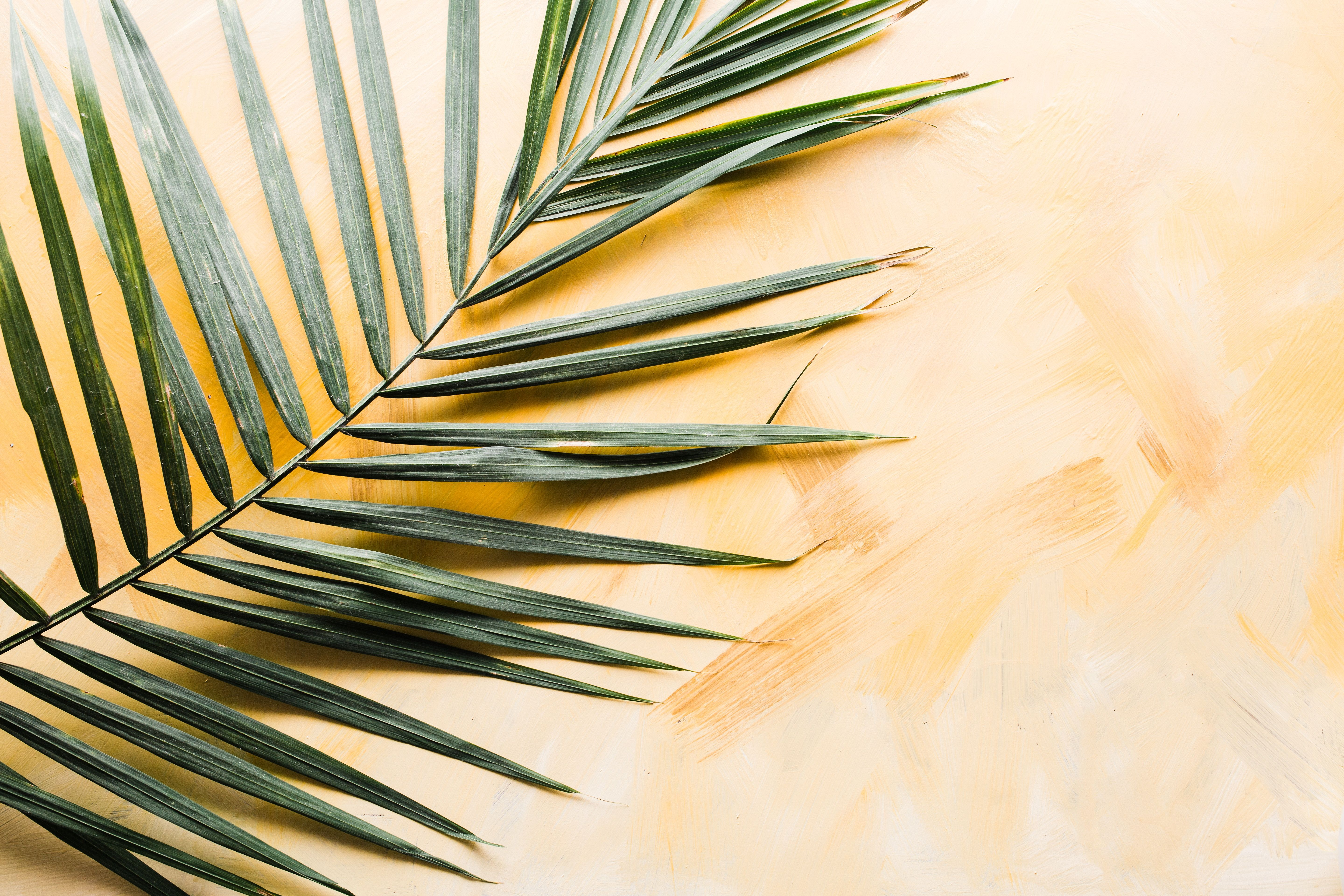 A palm frond on the ground